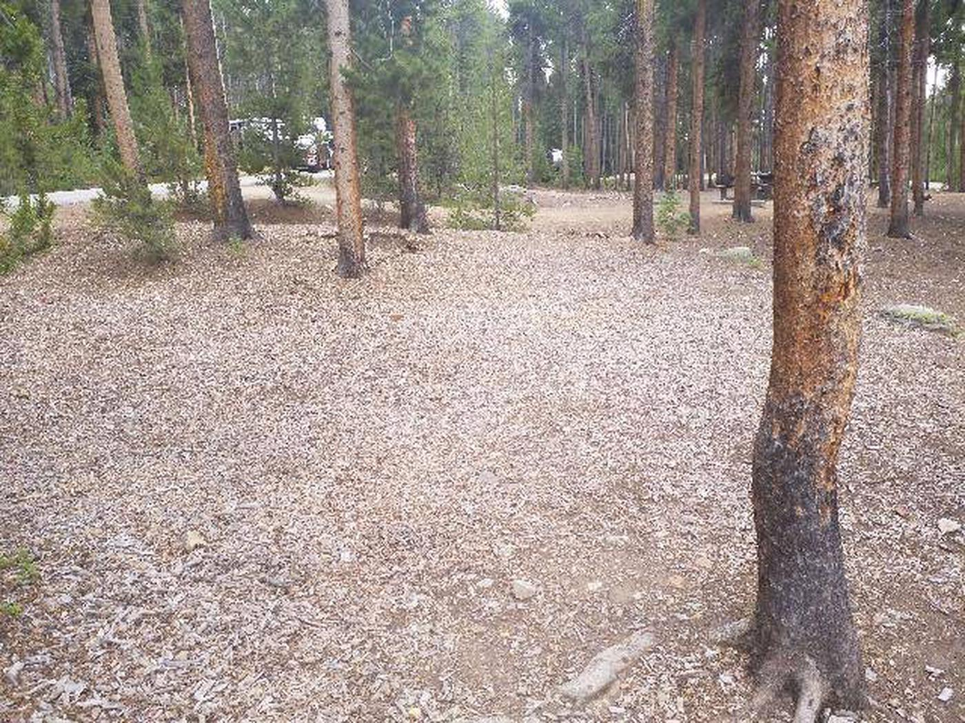 Baby Doe Campground, site 44 clearing