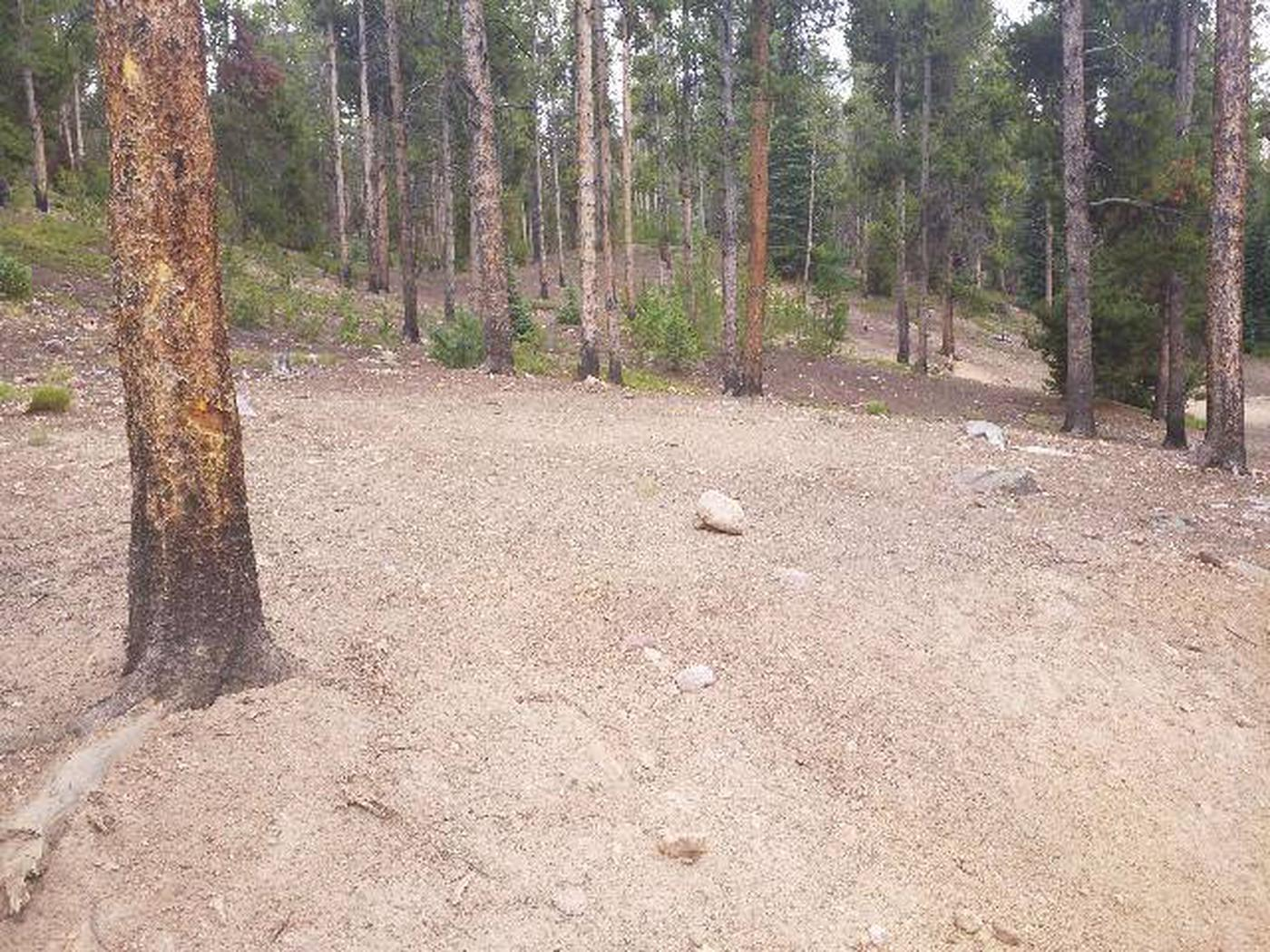 Baby Doe Campground, site 46 clearing 1