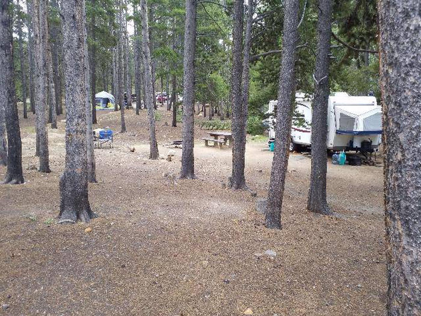 Baby Doe Campground, Site 5 sideview