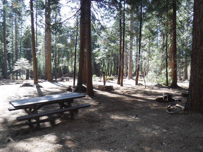 Campsite 43
