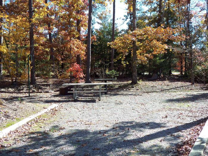 Longwood CampgroundCampsite #63