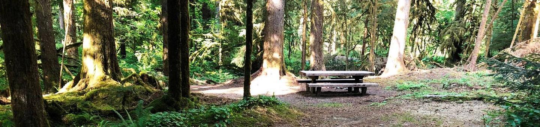 Gold Basin CampgroundSite 81