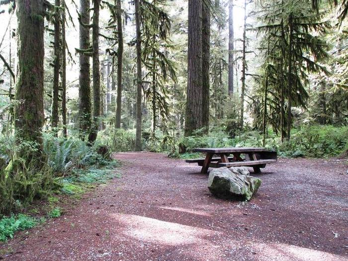 Swift Creek CampgroundSite 25