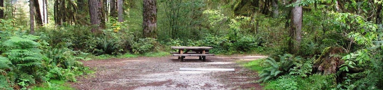 Swift Creek CampgroundSite 31