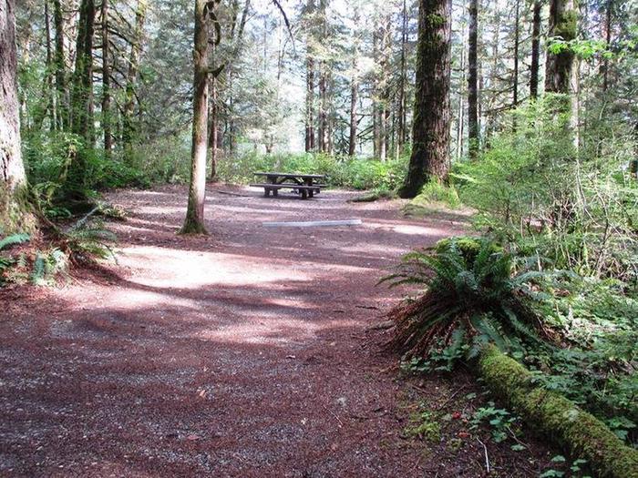 Swift Creek CampgroundSite 41