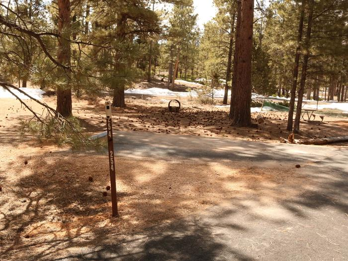 Sunset Campground Site 254Site 254