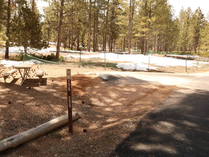 Sunset Campground Site 256Site 256