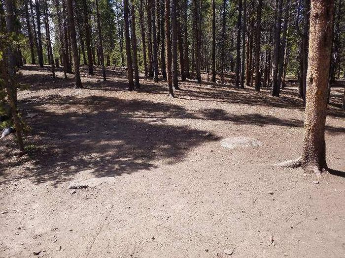 Printer Boy Group Campground, Site 1 clearing