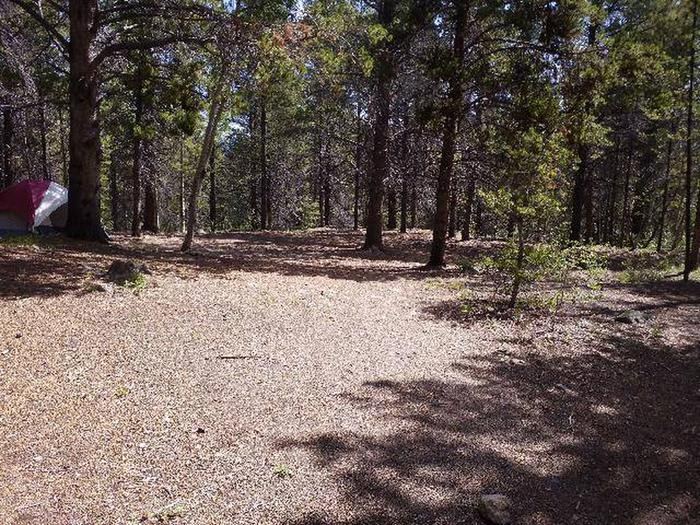 Printer Boy Group Campground, Site 2 clearing