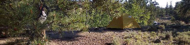 White Star Campground, site 46