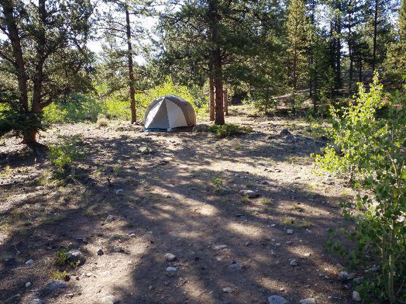 White Star Campground, site 51 tent clearing