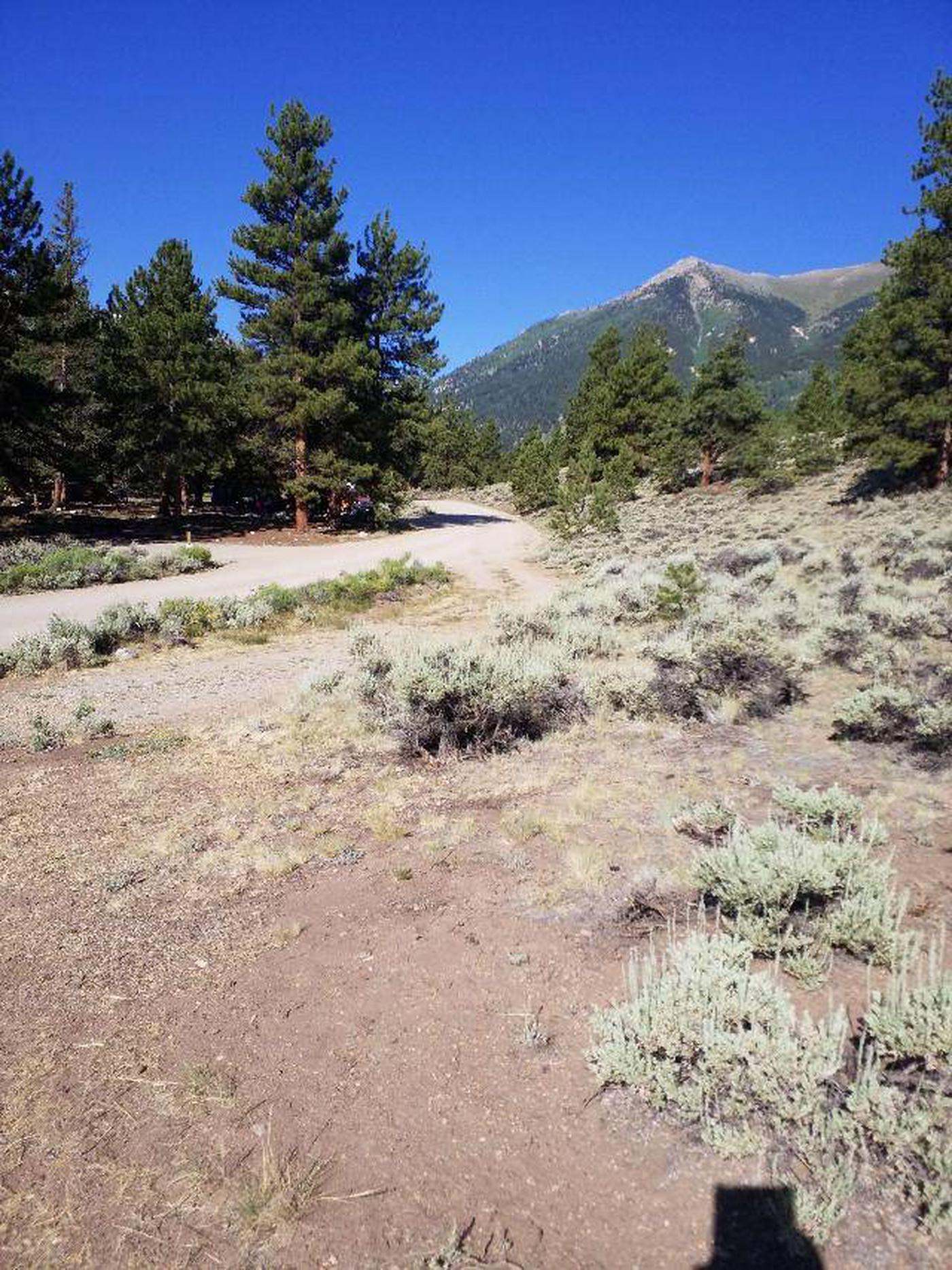 White Star Campground, site 59 view