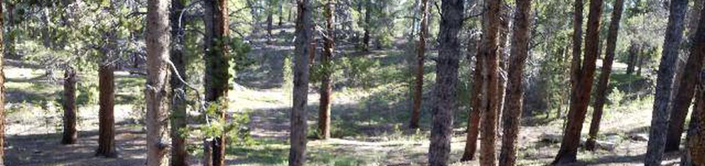 Father Dyer Campground, site 6