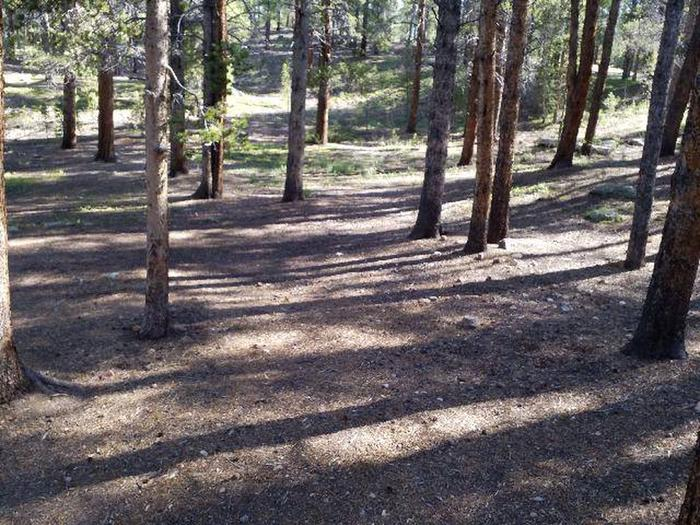 Father Dyer Campground, site 6 clearing