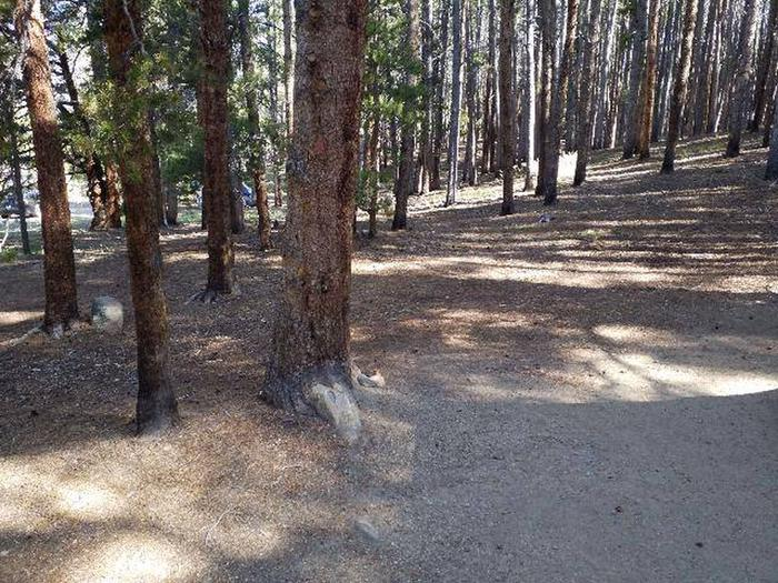 Father Dyer Campground, site 10 clearing