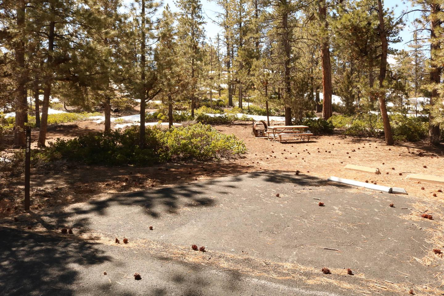 Sunset Campground Site 290site 290