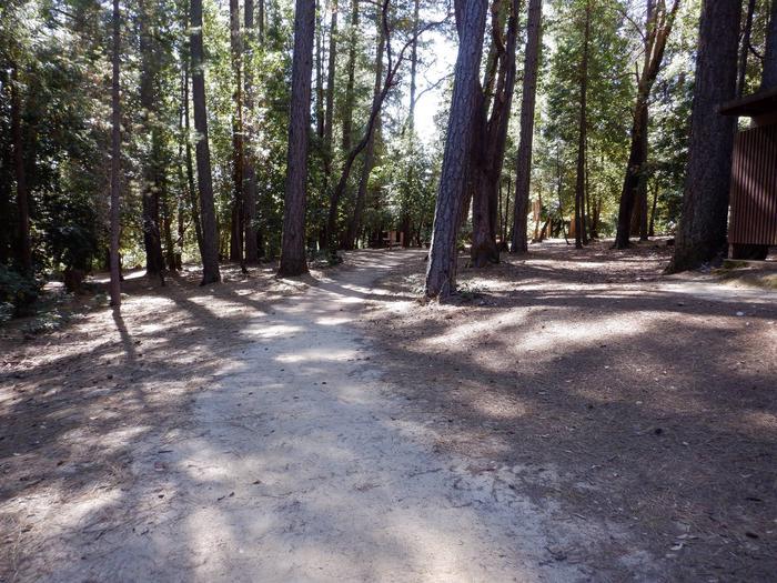 Walking Path to Manzanita Campsite