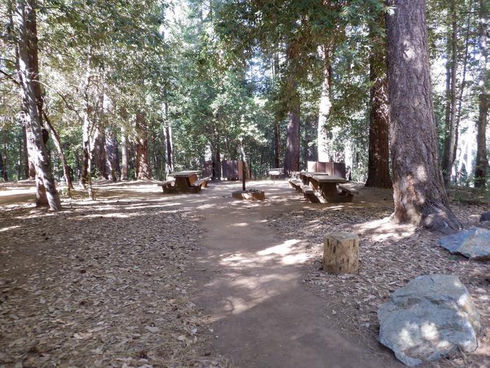 Douglas Fir Campsite