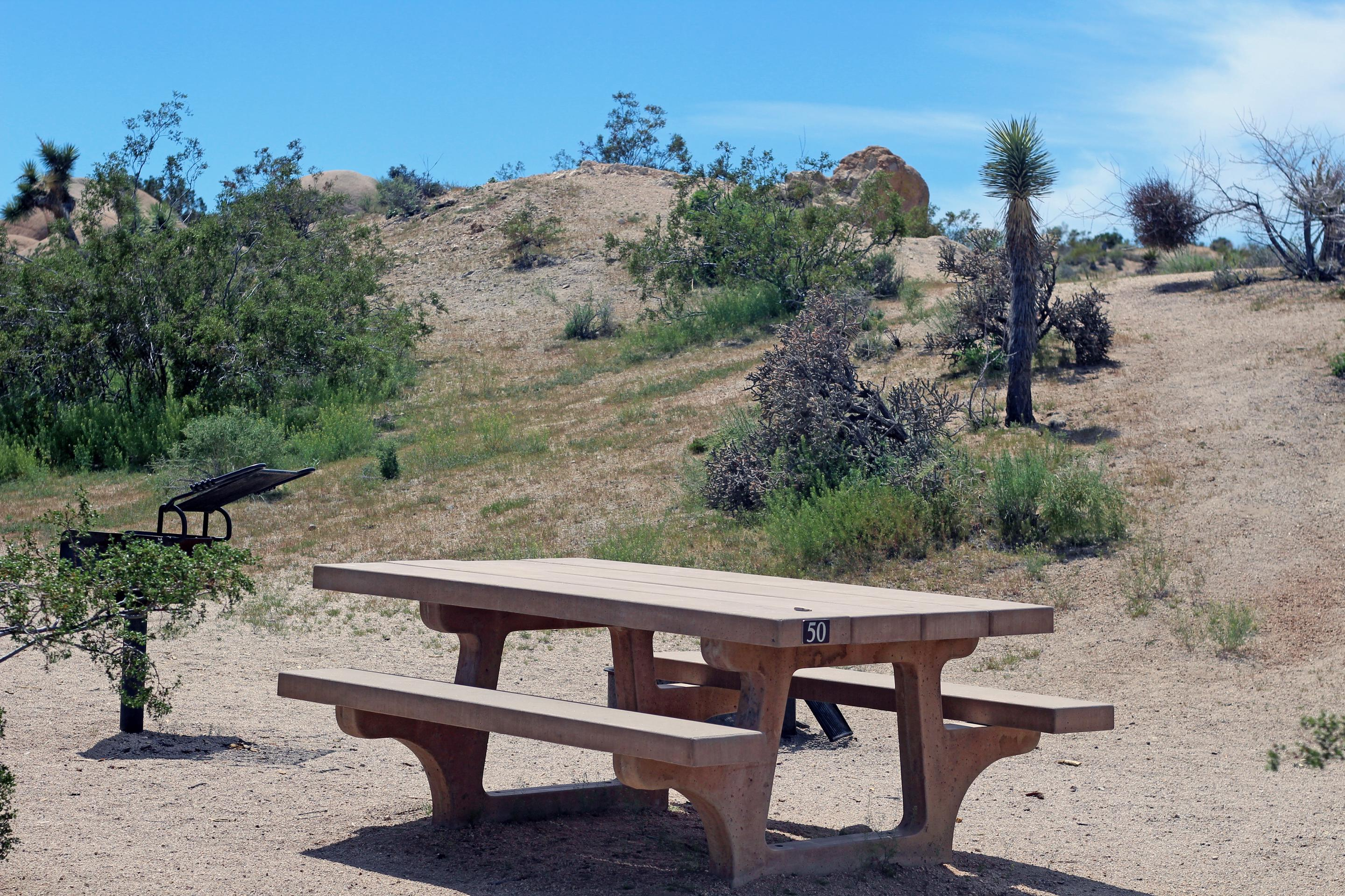 Campsite  with picnic table surrounded by gentle rise and green plants.Campsite.