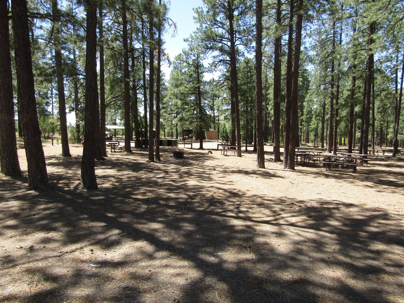 Picnic tables among pine treesPonderosa Group Campground sits among ponderosa pines which provide shade for group campers. Campsites can accommodate 10-50 campers each.