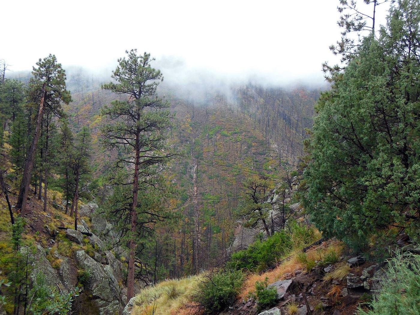 View of a tree covered mountainside with the peak obscured by fogView from Upper Crossing. Bandelier is home to over 70 miles of trails, much of which is accessible from the trailhead located at Ponderosa Group Campground
