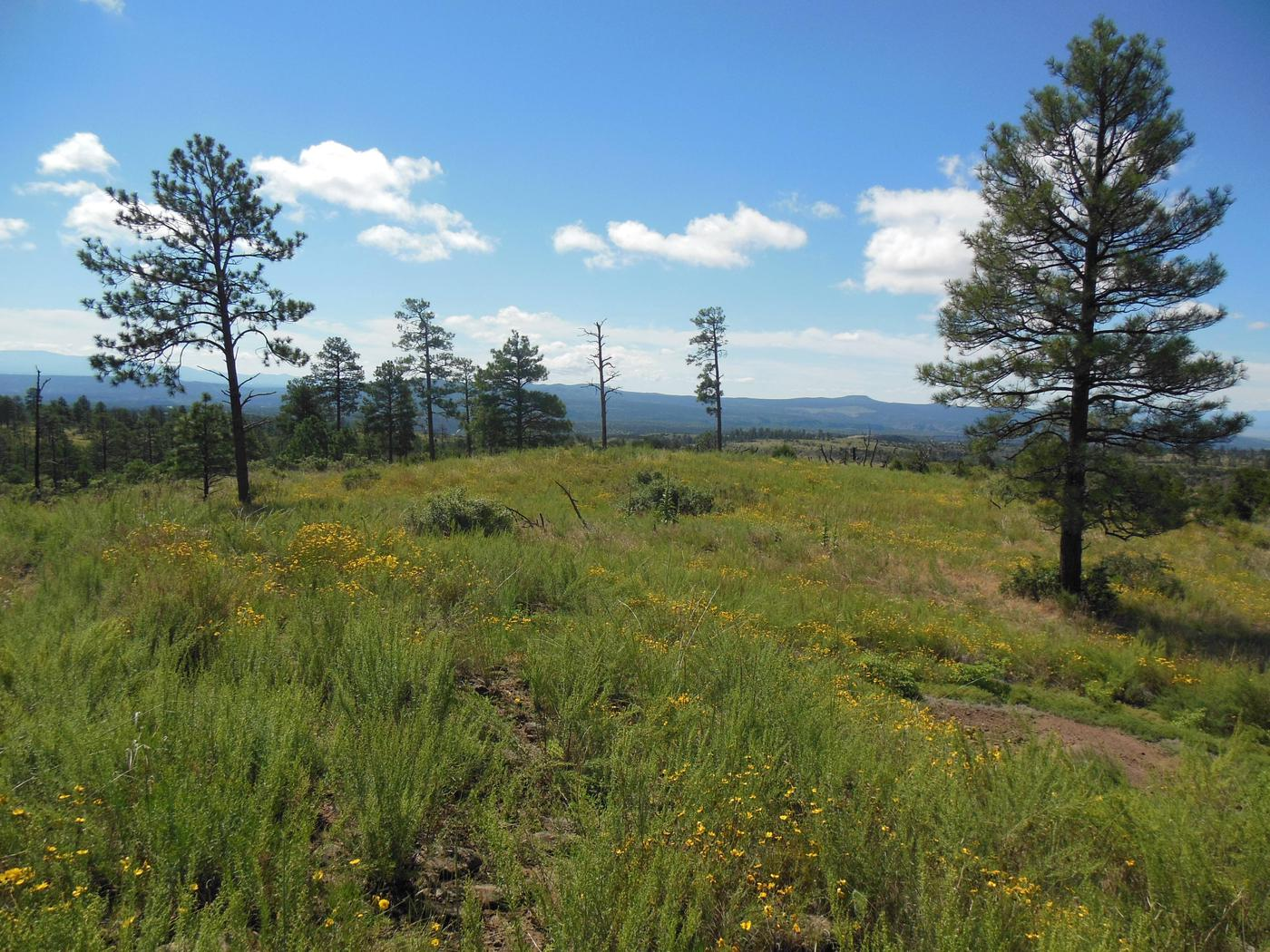 Mountain meadow with blooming flowers and scattered pinesPonderosa Group Campground is a short drive from other park trailheads where hikers can experience the high-country at Bandelier.