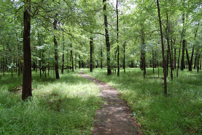 Beard's Lake Nature Trail