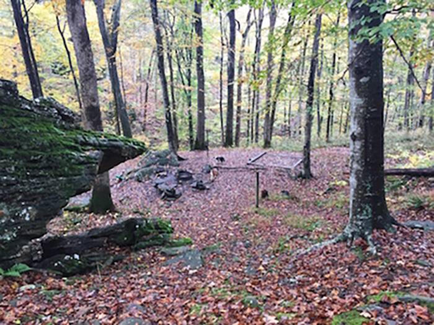 Back-country Sal Hollow campsiteSal Hollow Campsite