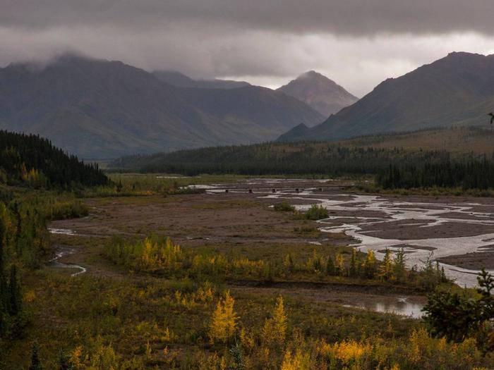 river flowing from mountains blanketed by clouds, and through a forest tinged yellow by fall colorsRain storm brewing in the mountains along the Teklanika River