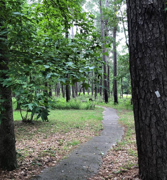 Cagle walking pathWalking path between the two campground loops