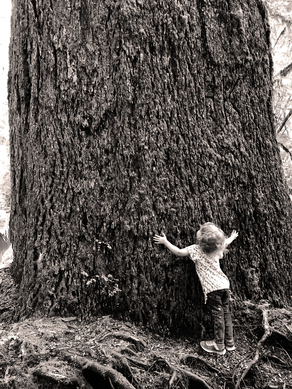 A child hugs a tree in the Valley of the Giants.