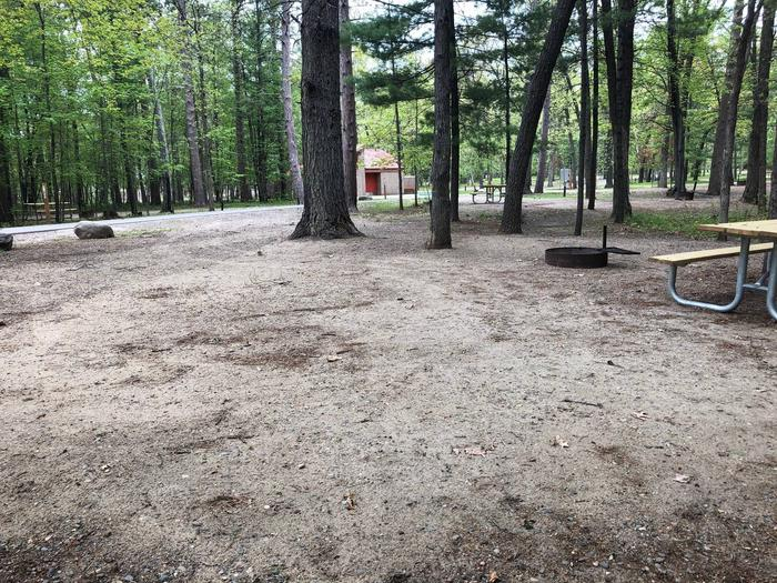 Campsite #41 BackCampsite #41
