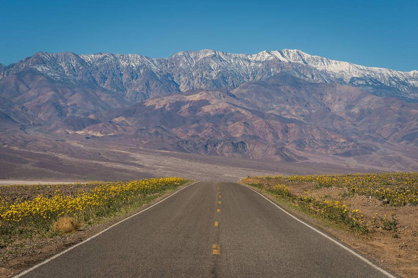 paved road lined with yellow flowers, snow-covered mountains in backgroundSpring in Death Valley