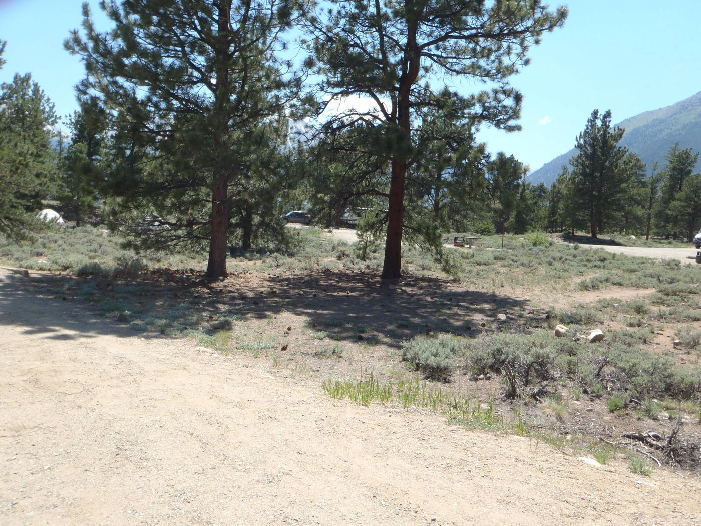 Whitestar Campground,  site 1 clearing