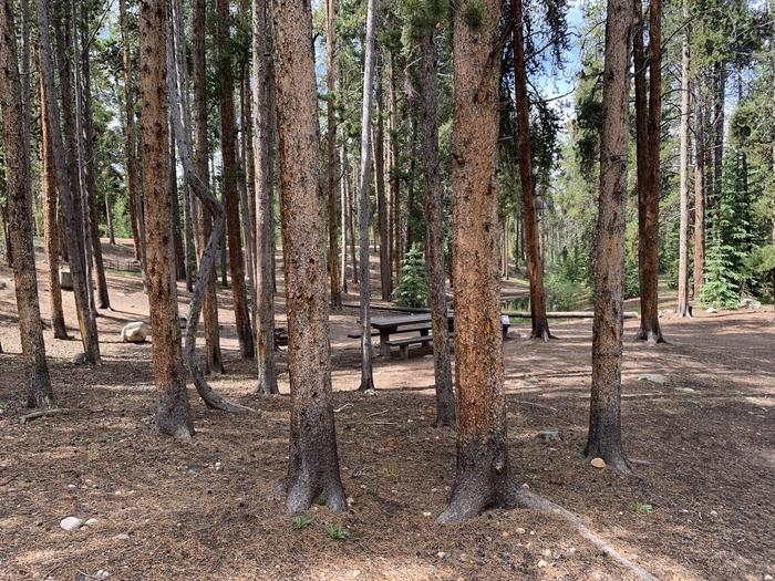 Molly Brown Campground, site 32 shade