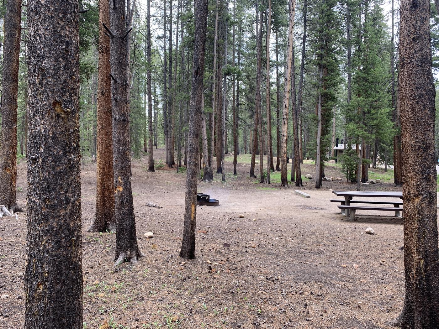 Molly Brown Campground, site 47 picnic table and fire ring 3