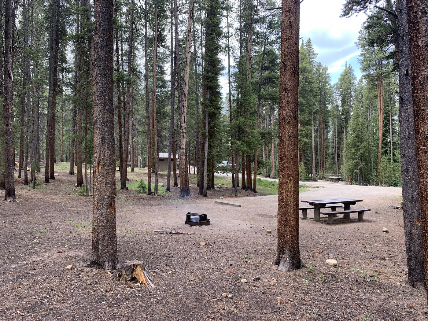 Molly Brown Campground, site 47 trees 2