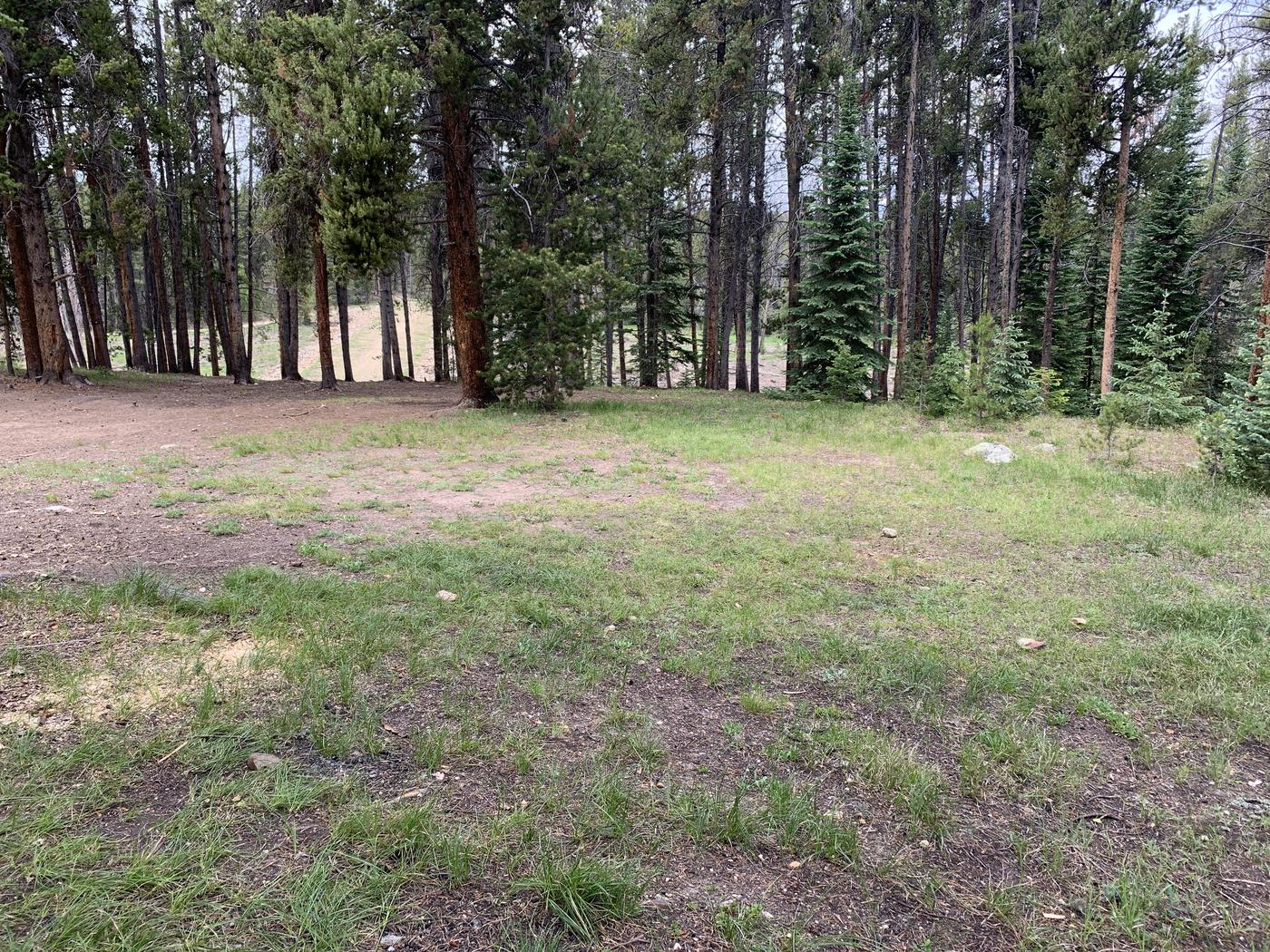 Expansive tent area at Molly Brown Campground, site 36
