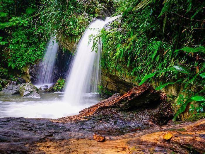 Preview photo of Reservaciones Para El Yunque / El Yunque Reservations