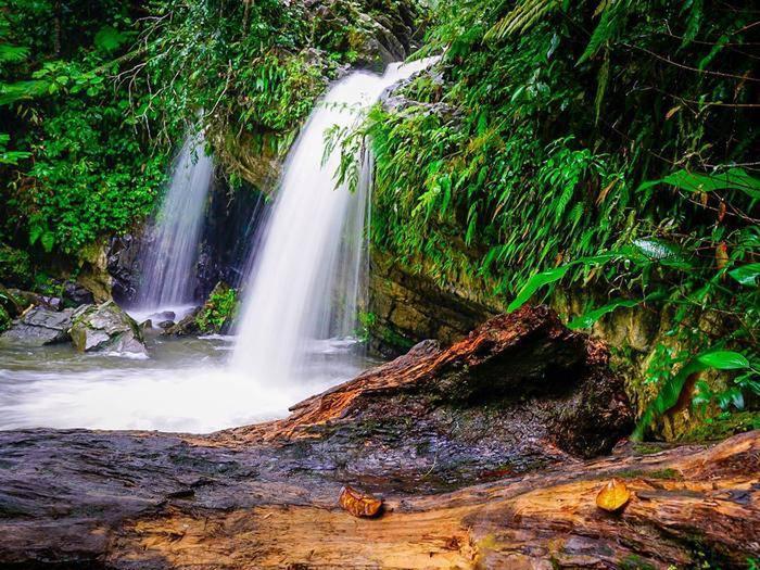 Dos cascadas en el Bosque Nacional El Yunque. / Two waterfalls in El Yunque National Forest.