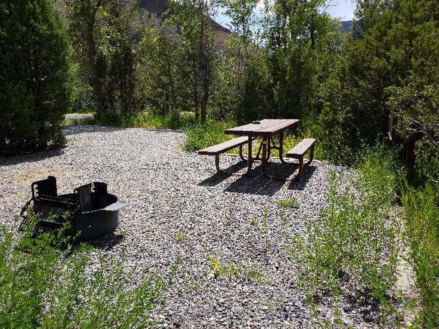 Wapiti Campsite 2 - Back View with Picnic Table