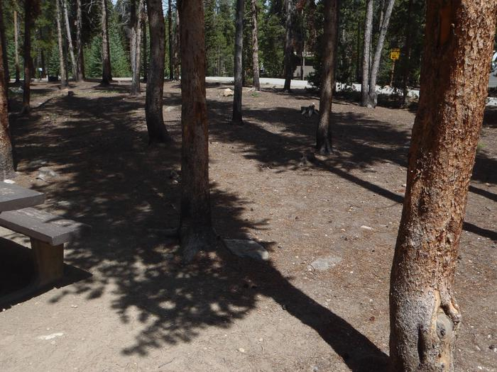 Baby Doe Campground, Site 3  clearing