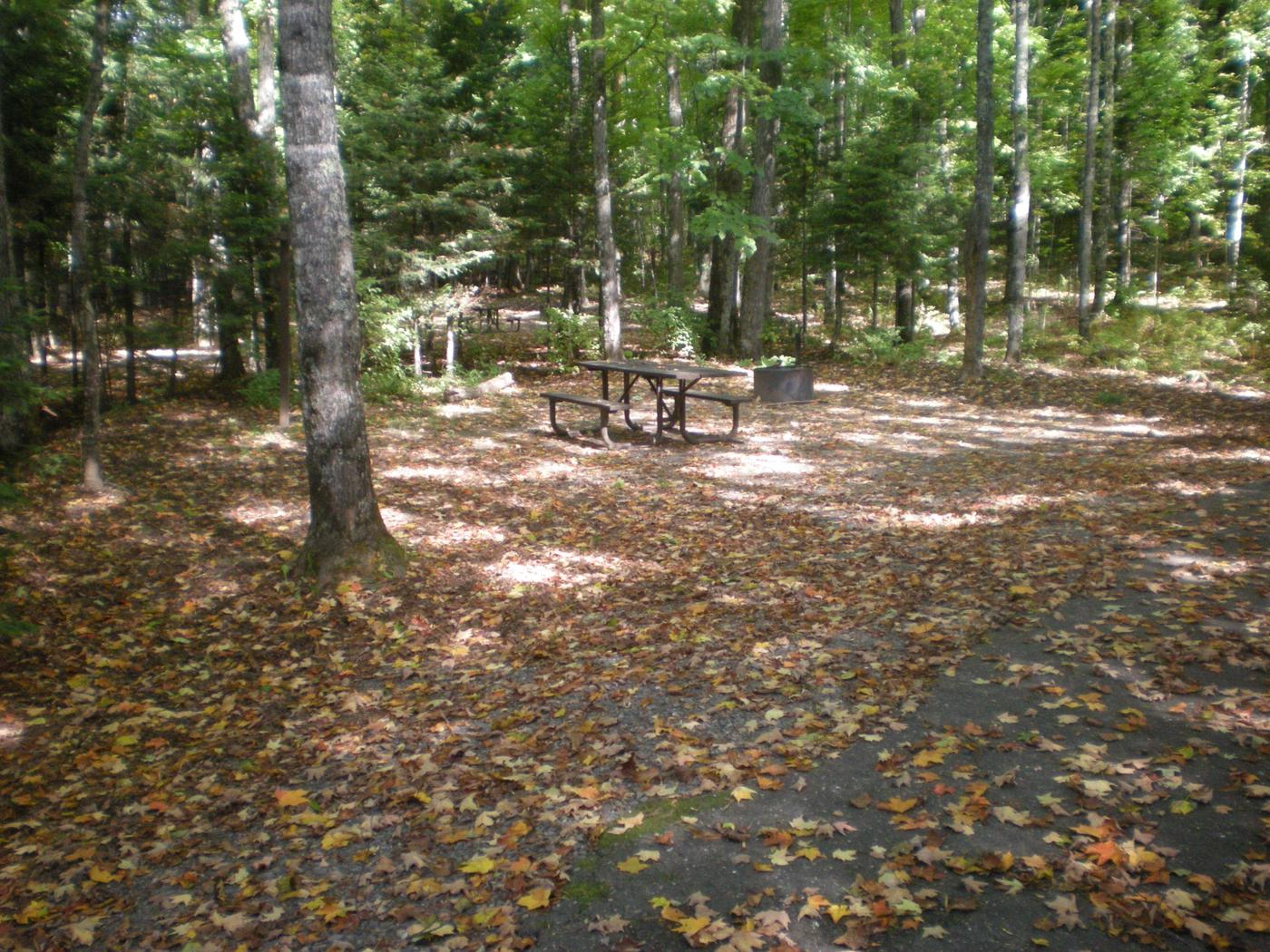 Left view of Lake Ottawa Campground campsite 23Left view of Lake Ottawa Campground campsite 23.