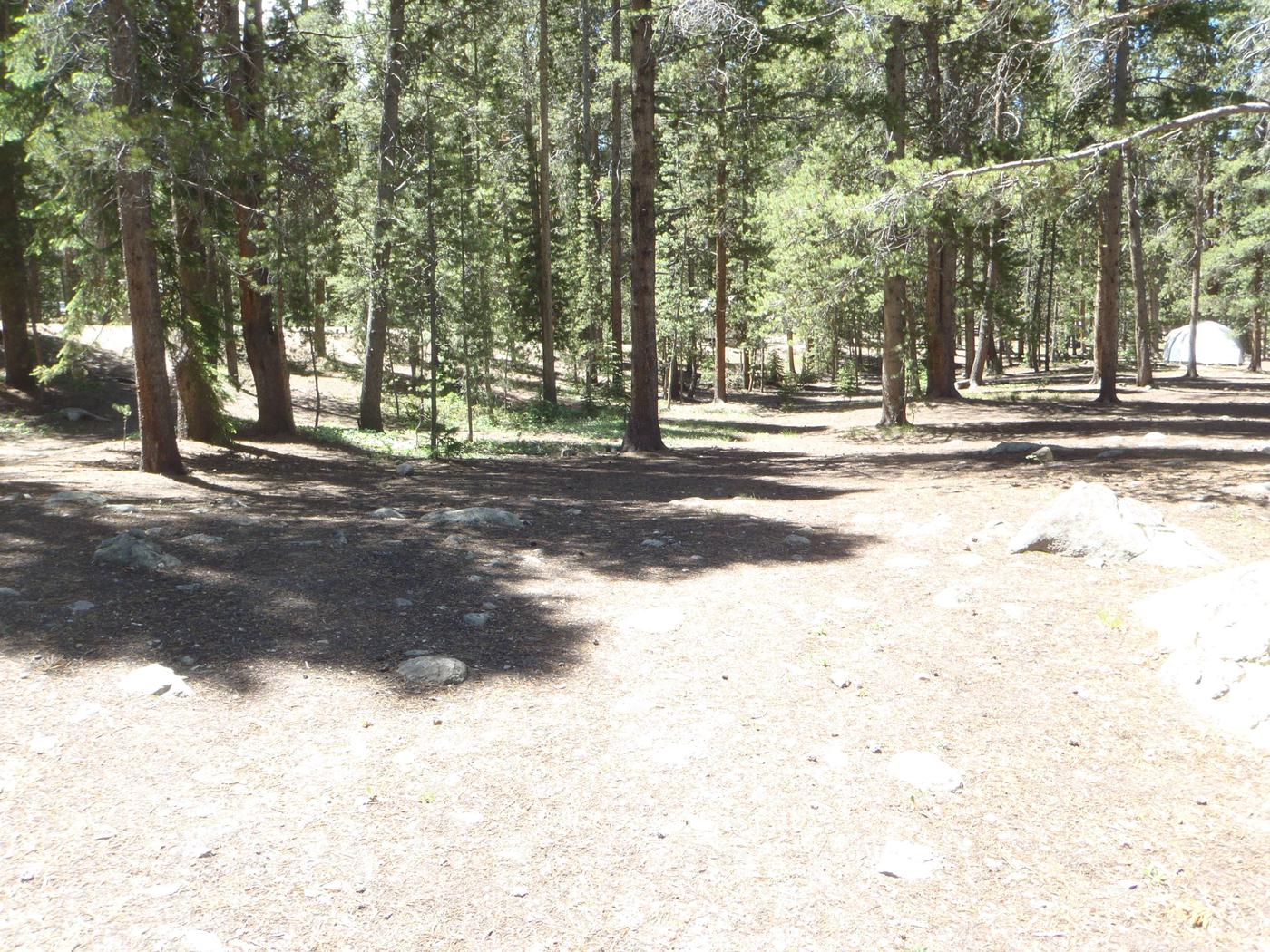 Molly Brown Campground, site 2 clearing