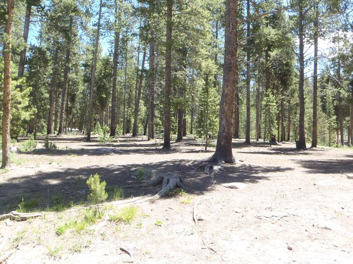 Molly Brown Campground, site 11 clearing