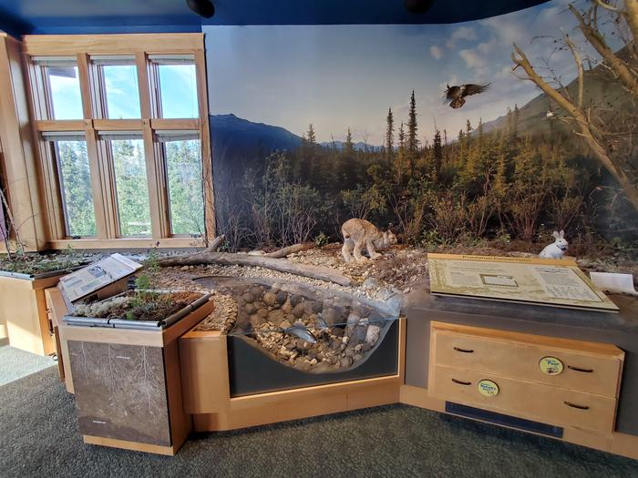 Wildlife and Ecosystem Exhibit at Arctic Interagency Visitor CenterExhibits at the Arctic Interagency Visitor Center show animals depend on each other for survival in the unforgiving Arctic.