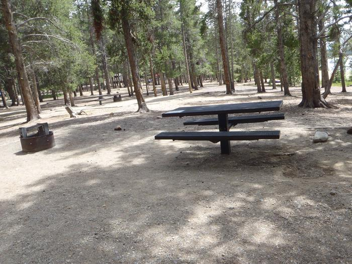 Baby Doe Campground, site 11 picnic table and fire ring