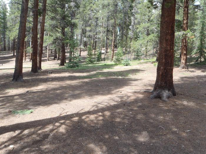 Baby Doe Campground, Site 20 clearing