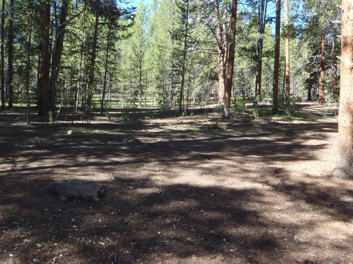 Father Dyer Campground, Site 9 clearing