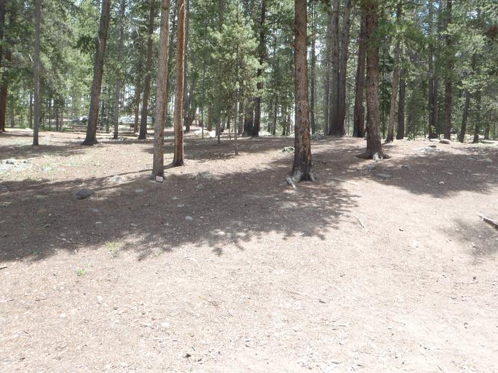 Molly Brown Campground, site 5 clearing